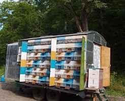 Компактный пчеловодный павильон